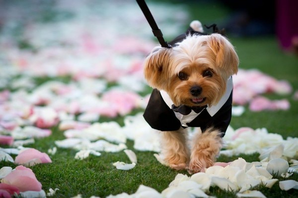 dogs_in_wedding_01