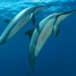 noronha-golfinhos