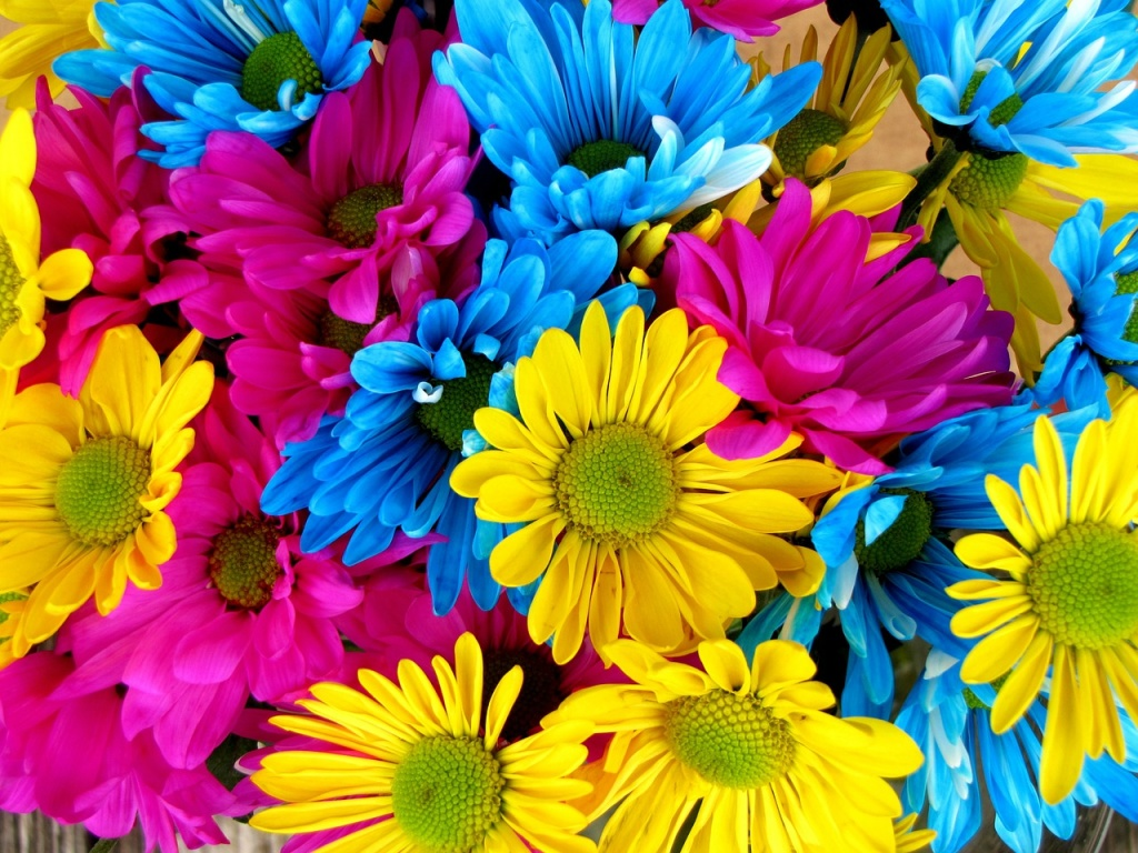 color_daisies